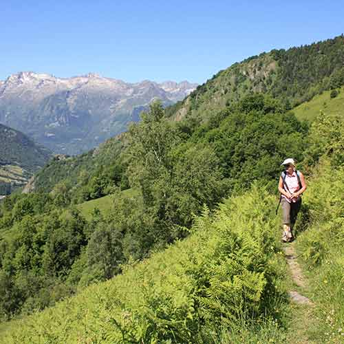 Montagne Fleurie Barèges