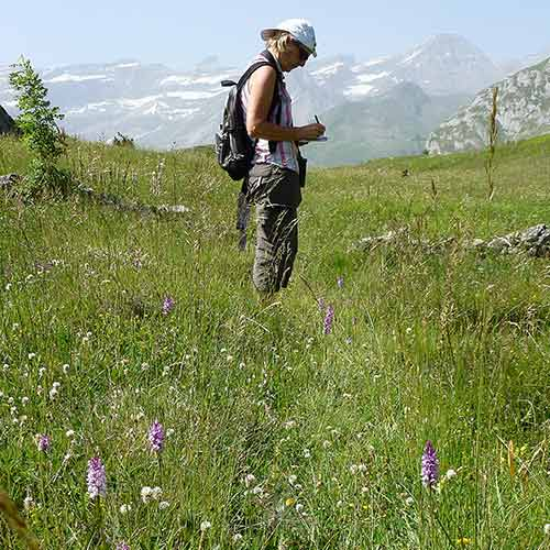 Pyrenees wildlife walks